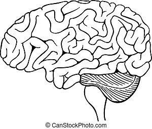 brain - illustration of a brain isolated