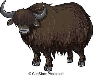 buffalo - illustration of a buffalo on a white background