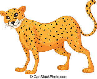 cheetah - illustration of a cheetah on a white background