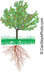 Illustration of a Cherry tree with roots with fruit