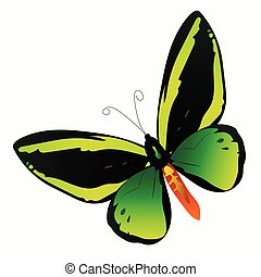 illustration of a colorful butterfly