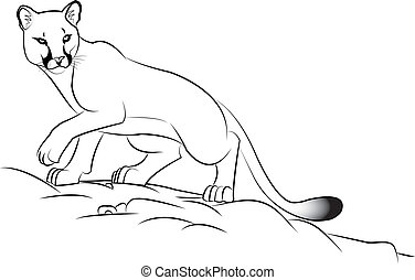 cougar - Illustration of a cougar