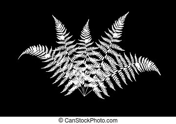 fern - Illustration of a fern on a black background