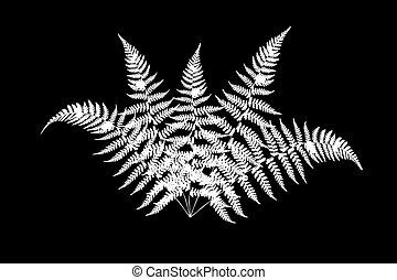 Illustration of a fern on a black background