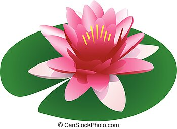 Illustration of a floating pink lotus on a lily pad, ...