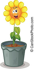 flower in the pot