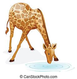 giraffe - illustration of a giraffe on a white background