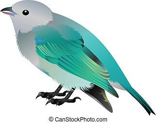 grey headed blue bird