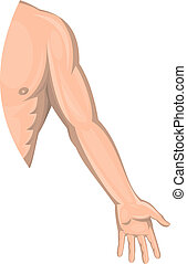 Human male arm left side isolated - illustration of a Human...