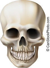 Illustration of a human skull