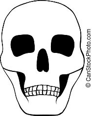 Illustration of a human skull.