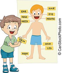 Parts of the Body - Illustration of a Kid Identifying the ...