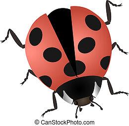 illustration of a ladybug isolated on white