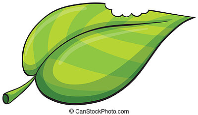 a leaf - illustration of a leaf on a white background