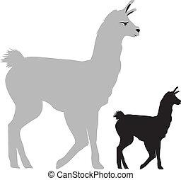 illustration of a llama side view - walking llama on a white...