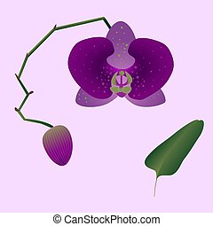 Illustration of a pink orchid with a bud, leaf and stem on the light pink background.