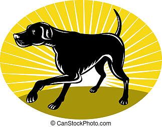 Pointer dog with sunburst - illustration of a Pointer dog ...