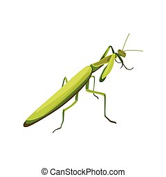 illustration of a praying mantis. symbol of fighting style mantis