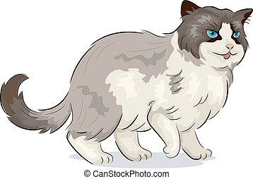 Ragdoll Cat - Illustration of a Ragdoll Cat