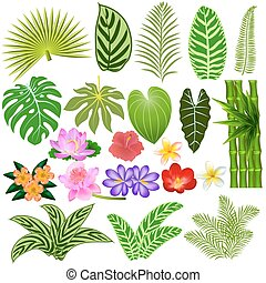 Illustration of a set of tropical leaves and flowers on a white background