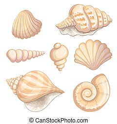 Illustration of a shell collection