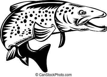Spotted or speckled trout jumping - illustration of a...