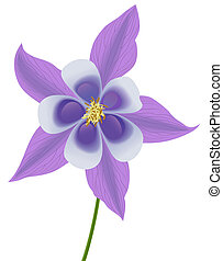 columbine - illustration of a violet columbine
