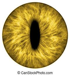 yellow animal iris