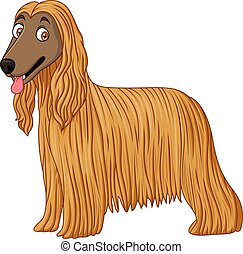 Afghan Hound dog - Illustration of Afghan Hound dog