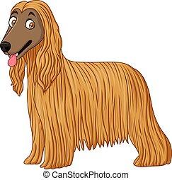 Afghan Hound dog - Illustration of Afghan Hound dog