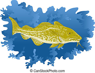 Atlantic cod fish - illustration of an Atlantic cod fish
