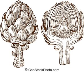 illustration of artichoke - vector set of engraving...