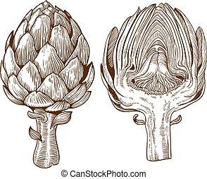 illustration of artichoke - vector set of engraving...