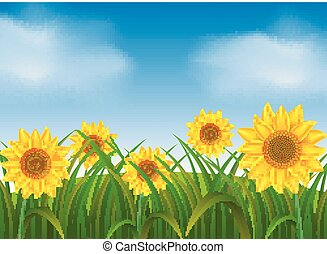 Background scene with sunflowers in garden