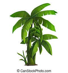 illustration of banana tree and ripening bananas