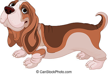 Basset Hound - Illustration of Basset Hound breed dog