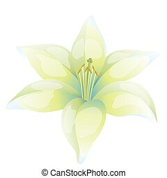 Illustration of beautiful lily on white background