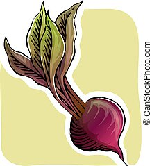 Illustration of beetroot with its leaves