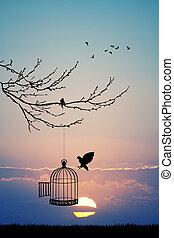 bird cage on tree