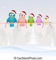 birds family at Christmas