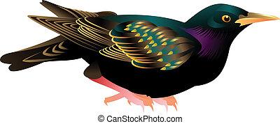 illustration of black bird