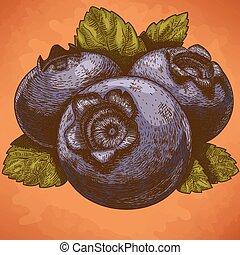 illustration of blueberry