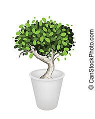 Illustration of Bonsai Tree in A Ceramic Pot