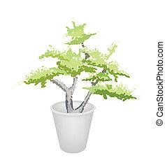 Illustration of Bonsai Tree in Flower Pot