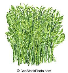 sweet leaf bush - illustration of bunch of fresh healthy ...