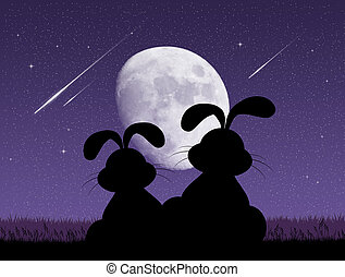 bunnies looking the shooting stars