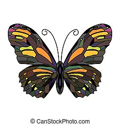 illustration of Butterfly on white background