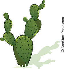 Illustration of Cactus with its shadow on white back ground