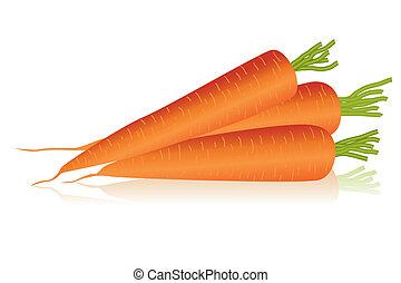 carrots - Illustration of carrots
