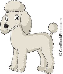 Cartoon poodle dog isolated on white background